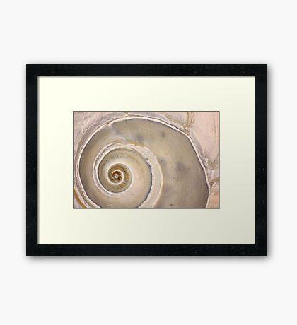 Snail Shell Spiral Framed Print