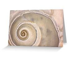 Snail Shell Spiral Greeting Card