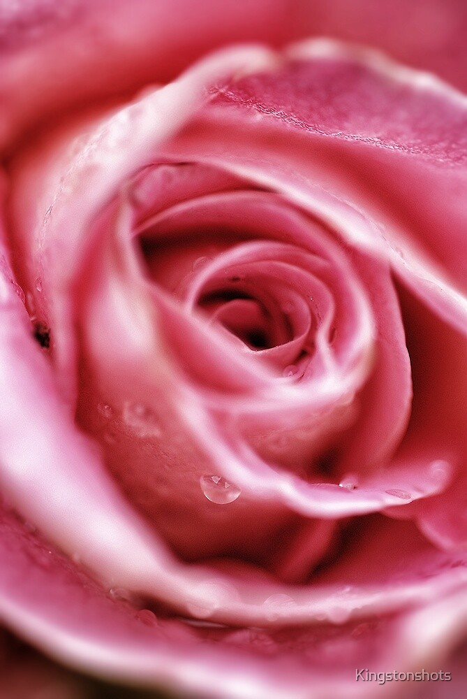 Give my love to Rose by Kingstonshots