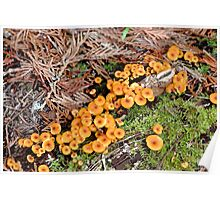 Macro Mushrooms Poster