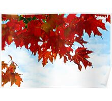 Beneath the Maple Trees Poster