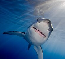 White Shark by Carlos Villoch