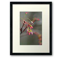 Maple Seeds Framed Print