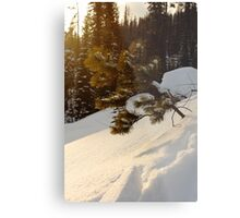 Young Pine in the Snow Metal Print