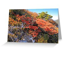 Fagus Update from Mount Campbell Greeting Card