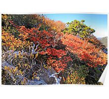 Fagus Update from Mount Campbell Poster