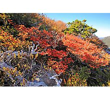 Fagus Update from Mount Campbell Photographic Print