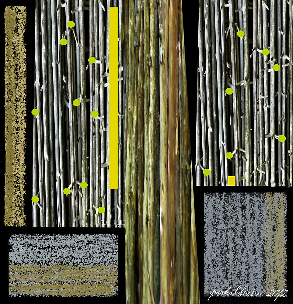 """""""Bamboo Fields Forever"""" by Patrice Baldwin"""
