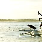 Dog Surf by Stephanie Stengel | stelonature photography