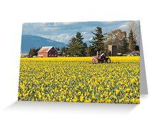 Skagit Valley Daffodil Fields Greeting Card