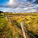 Old fence by Dave  Gosling Designs