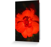 Glowing Bloom Greeting Card