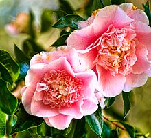 Hanging Camellias by Diego  Re