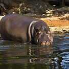 Hippopotamus by LJ_©BlaKbird Photography