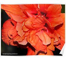 macro flora 009 Poster