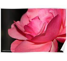 macro flora 010 Poster