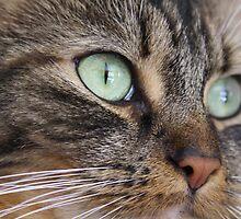 Prettiest Eyes by Amy L Edwards