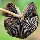 Loving Mushroom by Robyn Forbes