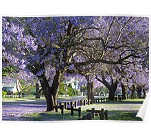 Purple Rain: Jacarandas, Grafton, NSW Poster