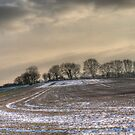 Winter field by Jem Dowse