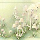 Toadstools card by Laura Grogan