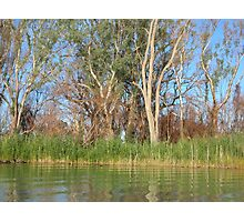 after bushfire Photographic Print