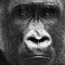 Ape #1 by Yannick Verkindere