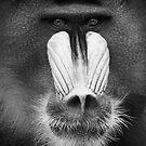 Ape #3 by Yannick Verkindere