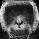 Ape #4 by Yannick Verkindere