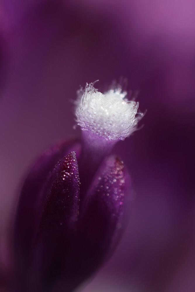 Pretty in Purple by Sharon Johnstone