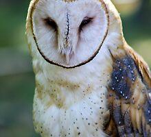 Barn Owl by Teresa Zieba