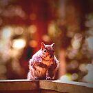 Squirrel by Pamela Rose Sime