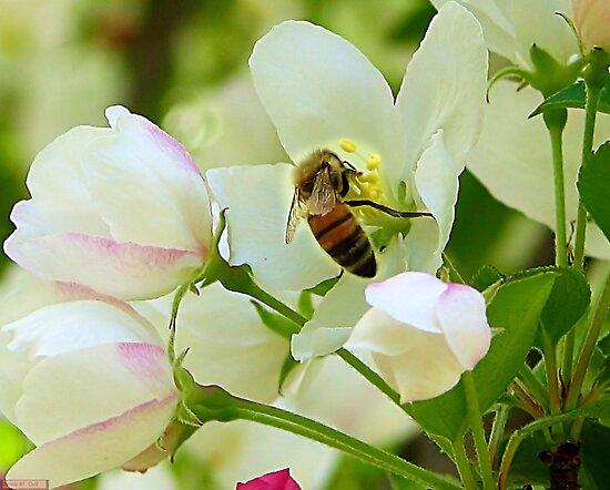 Spring May Flowers bring Pretty Bee's by Brenda Dahl
