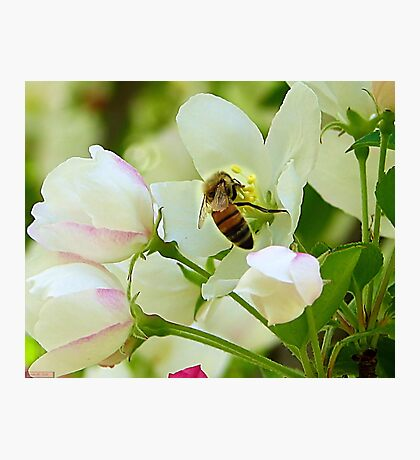 Spring May Flowers bring Pretty Bee's Photographic Print