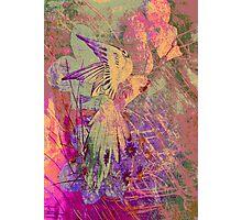 Amazing Parrot. Photographic Print