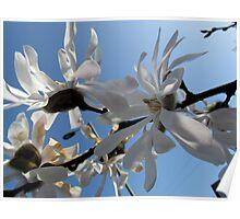 White on Blue 2012 Poster