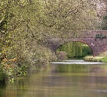 Bridge on the Tiverton Canal by Tony Steel