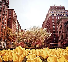 Spring - Park Avenue - New York City by Vivienne Gucwa