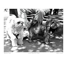 """Two Pooches Going For a Walk"" Photographic Print"