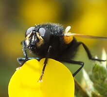No Bother To Hover by Mark Baldwin