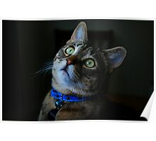 Blue Collar Kitty Poster
