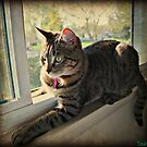 Tasha In The Window by jodi payne