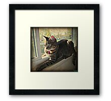 Tasha In The Window Framed Print