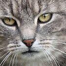 Becky's Cat by Julesrules