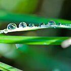 Morning Dew by scottseldon