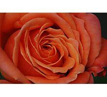Peach Rose Close-Up Photographic Print