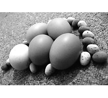 Eggs-Plane! Photographic Print