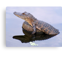 The Gator is BACK!! Canvas Print