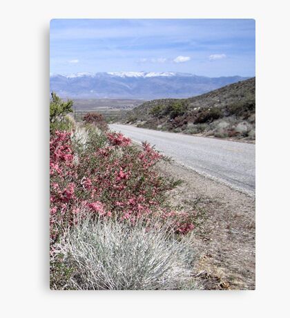 Road View Canvas Print