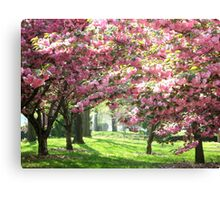 Cherry Blossoms, New York City Canvas Print